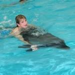cu-delfin