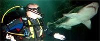 shark-diving1