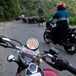 Localnic în India (ep. 3)- Haos organizat. Cum să conduci în traficul din India.