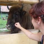 Rezervaţii de zimbri din România